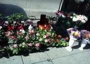 En avenida maipu alquiler de puesto de flores