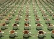 Curso de lectura de borra del café, sepa como interpretar su significado