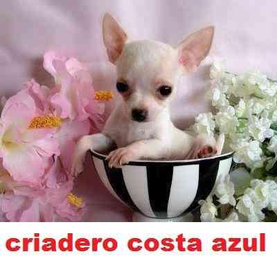 CRIADERO COSTA AZUL TELEFONO 46537208 O POR WHASAPP 1131670144