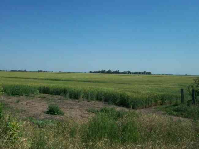 Campo para siembra en Venta en Ibarlucea, Santa Fe