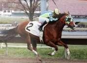 Entrenador de caballos de carreras