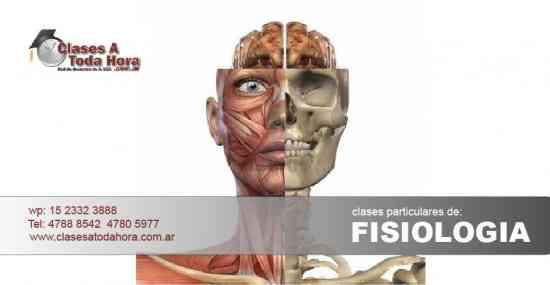 Clases particulares de Fisiología