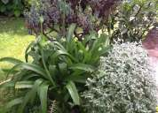 Jardinero realizo mantenimiento:parques, balcones,jardines