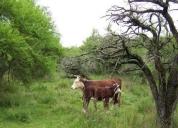 Vendo campo 178 hectareas,contactarse.
