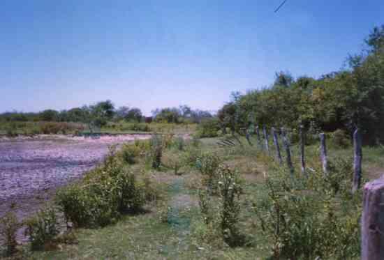 Campo en venta en Pinto, Santiago del Estero: Colonia Agricola Aschpa Suiaska Ruta Nacional 34