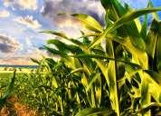 Jarabe de maiz - almidon de maiz – glucovil