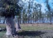 Campo 540 has - ganaderas