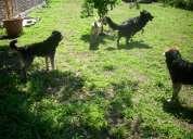 Hospedaje y guardería canina en castelar