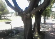 Poda, corte. poda en altura..extraccion-limpieza de palmeras