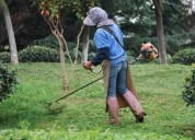 Desmalezamiento de terrenos con limpieza