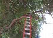 Poda. extraccion, poda en altura. limpieza de palmeras