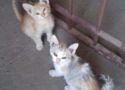 Regalo gatitos bebes!!!