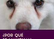 ¿querés saber por qué se manchan los ojos de tu perro y cómo solucionarlo?