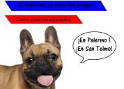 Clases de francés grupales para principiantes en palermo y san telmo