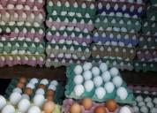 Vendo distribuidora de huevos.