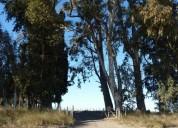 Campo en venta 205 hectarea