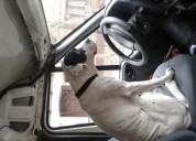 Transporte de mascotas puerta a puer ,156 994 7896