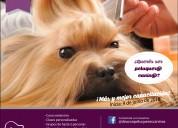 Curso peluqueria canina comercial basica mendoza