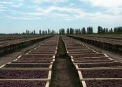 Complejo agroindustrial bodega secadero 30 has zona goudge en san rafael