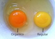 Huevos organicos a domicilio