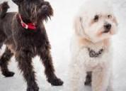 Pensionado guarderia canina en casa de flia