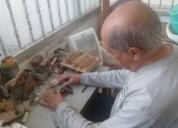 Reparacion integral de bandoneones ( luthier )